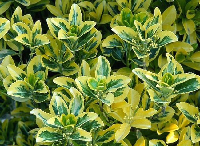 Blabla Jardinage (achats, déco, etc...) 18801210