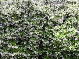 Blabla Jardinage (achats, déco, etc...) Images13