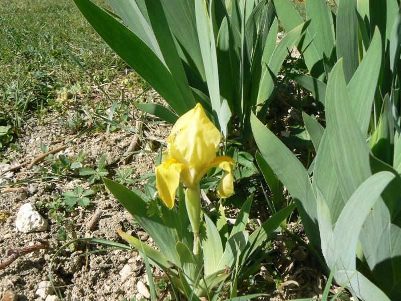 Iris 2012 P1030729