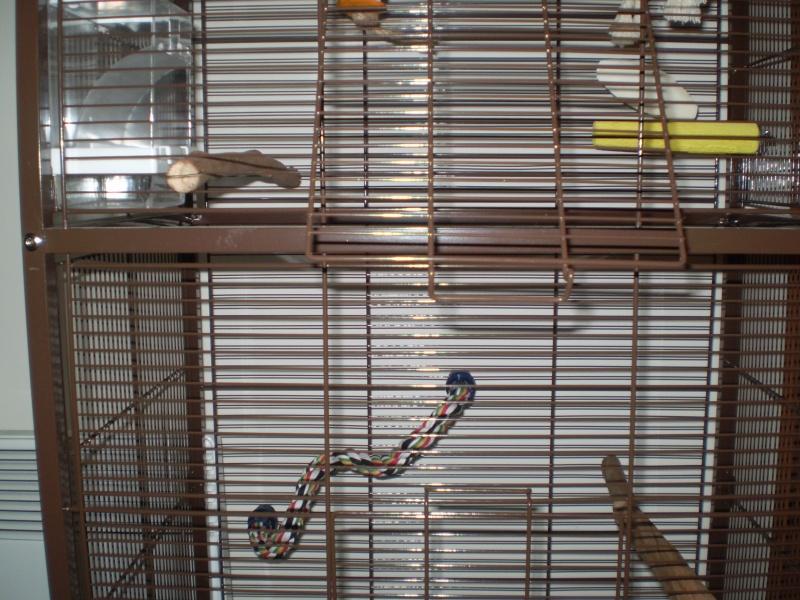 installation nouvelle volière Pb270012