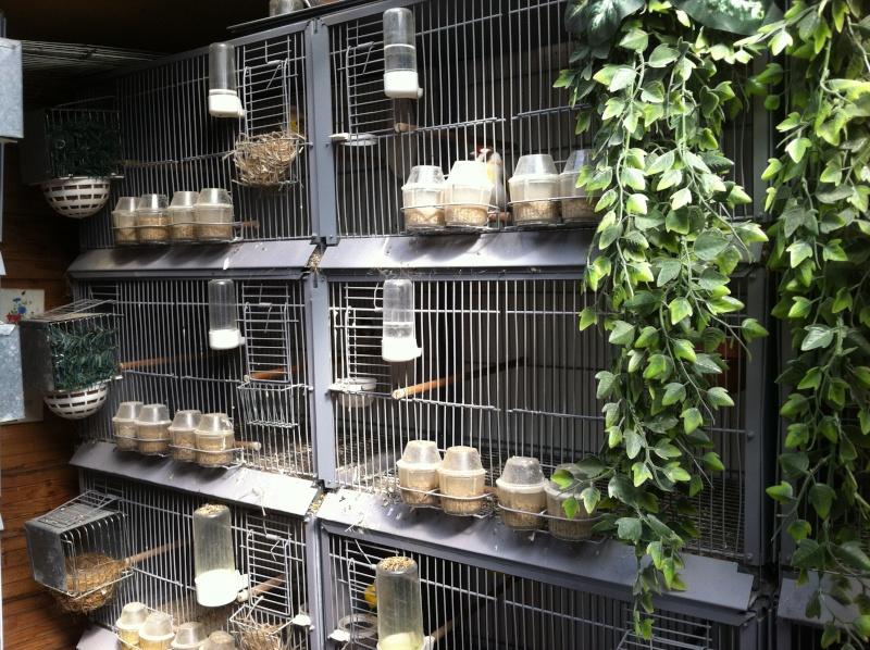 concours du mois février  2012(la pièce d'élevage ) Instal10