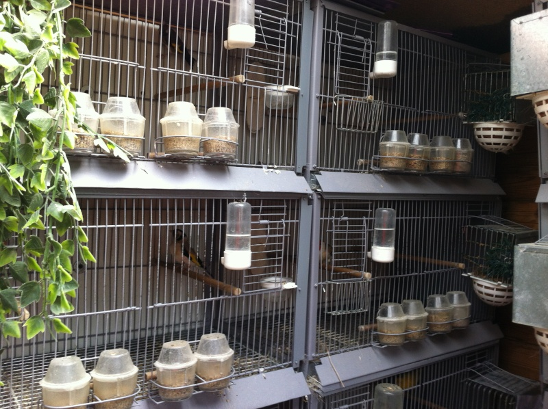 concours du mois février  2012(la pièce d'élevage ) Instal11