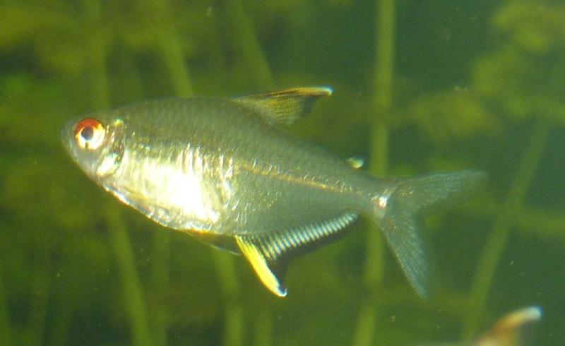 Mort de poisson....?!?!!?? Citron12