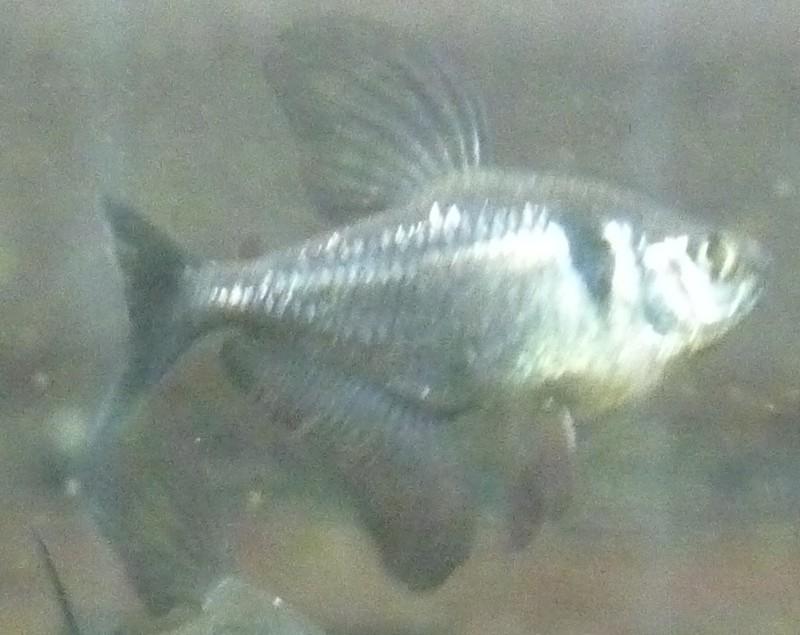 Mort de poisson....?!?!!?? Fant310