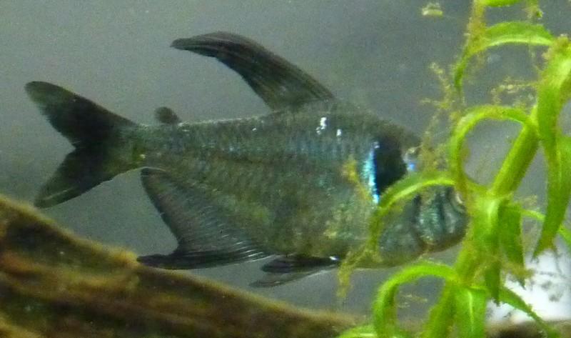 Mort de poisson....?!?!!?? Fant410