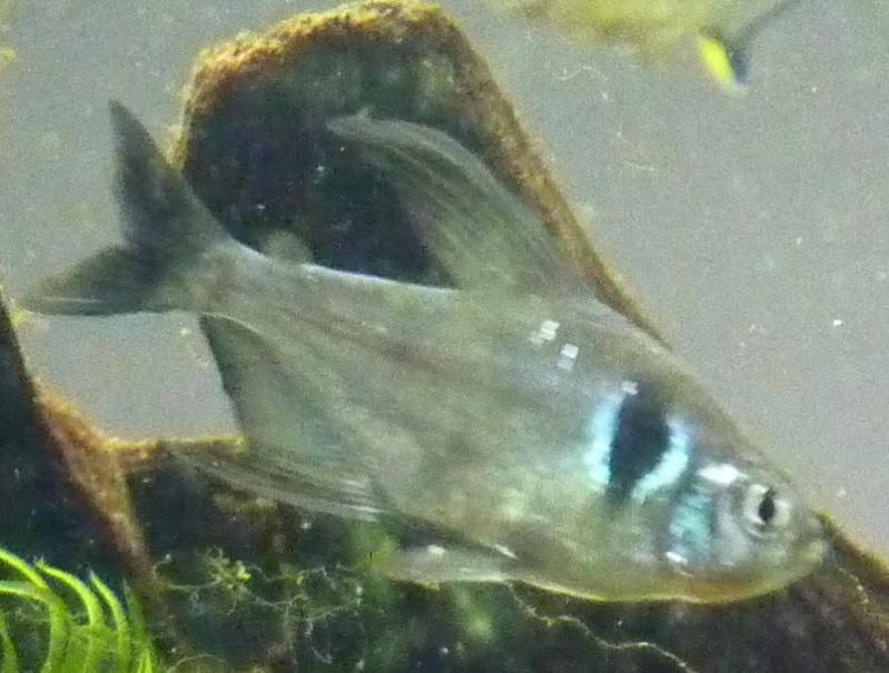 Mort de poisson....?!?!!?? Fant510