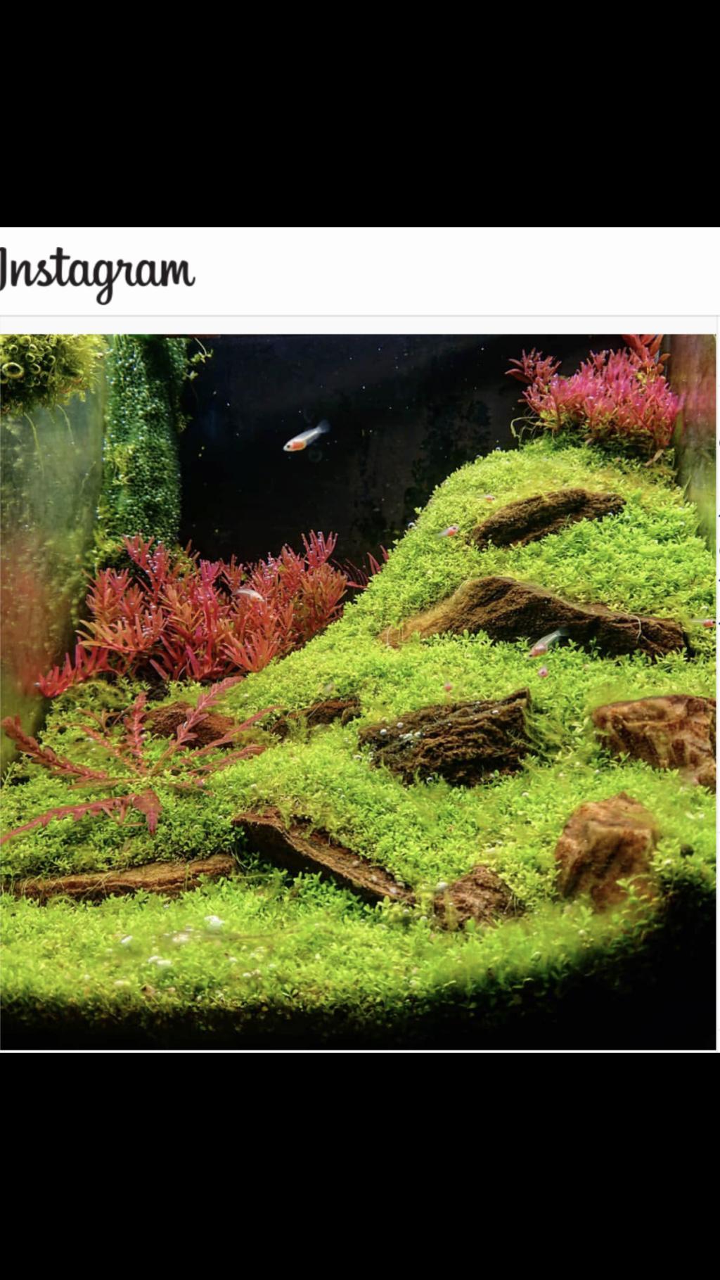 Nabazoo débutant en crevettes ;-) - Page 3 09477010