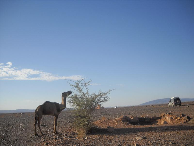 retour maroc 2012 Dscn1920