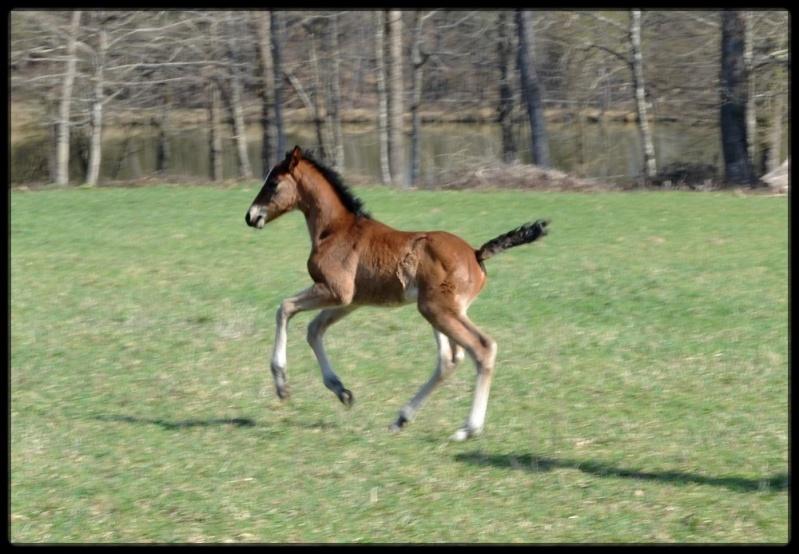 "Concours : ""cheval au galop"" GAGNANTE : TItâne - Page 2 C_izal19"