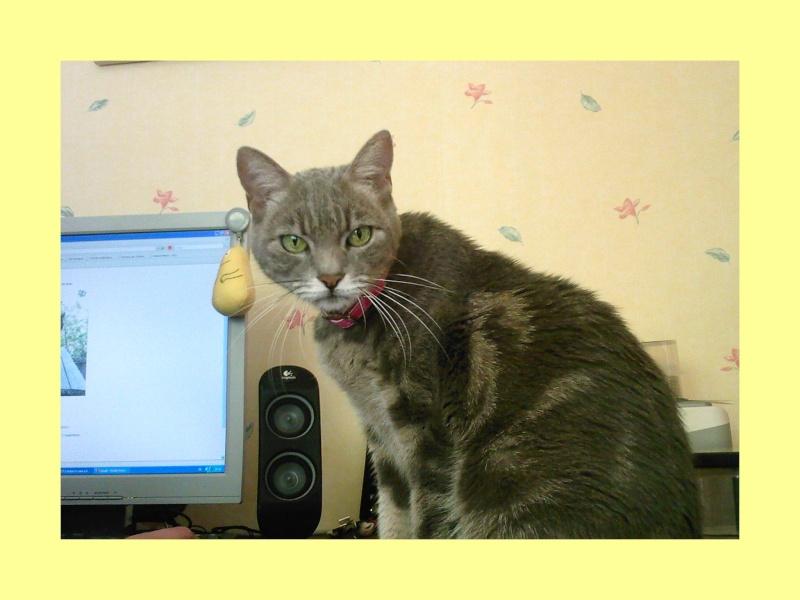 Votre premier chat - Page 2 Sp_a0010