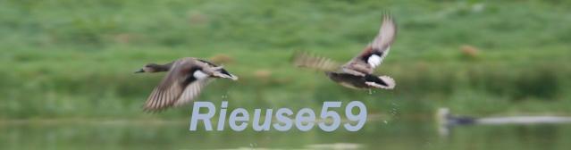 Resultats de la récolte d'ailes 2014/2015 Dsc_0139