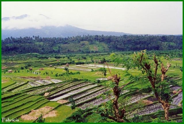 Photos de jardins, parcs, forêts... dans le monde Bali_r10