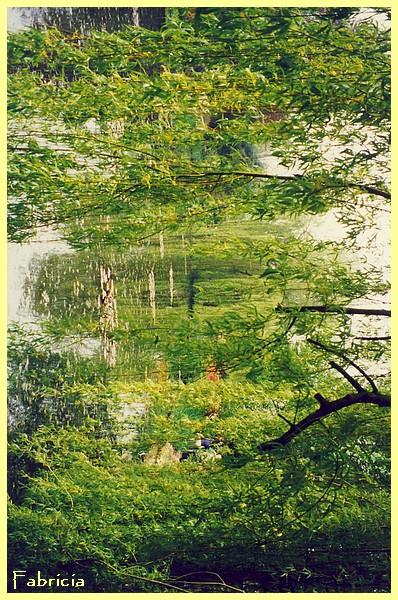 Photos de jardins, parcs, forêts... dans le monde - Page 2 Givern12