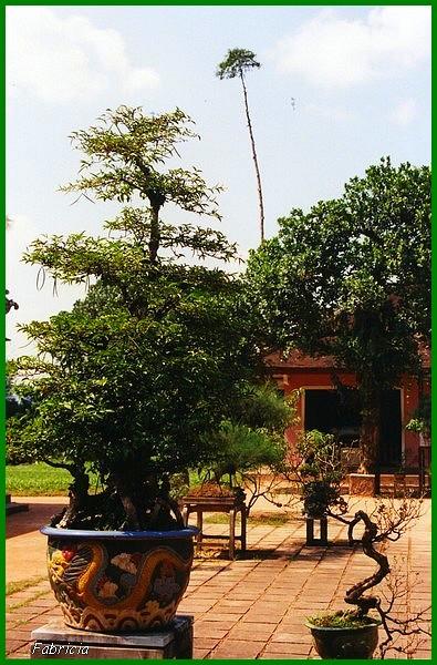 Photos de jardins, parcs, forêts... dans le monde - Page 3 Jardin10