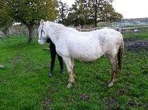 VENUS - ONC poney née en 1987 - adoptée en octobre 2012 par souris73 - Page 5 1_bmp16
