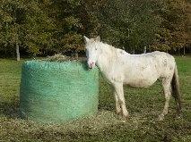 VENUS - ONC poney née en 1987 - adoptée en octobre 2012 par souris73 - Page 5 1_bmp17