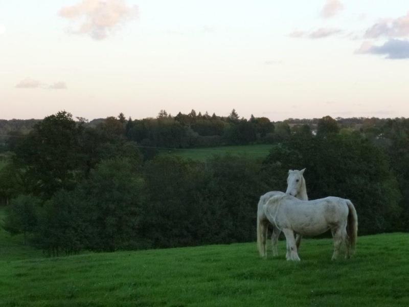 VENUS - ONC poney née en 1987 - adoptée en octobre 2012 par souris73 - Page 5 26952411