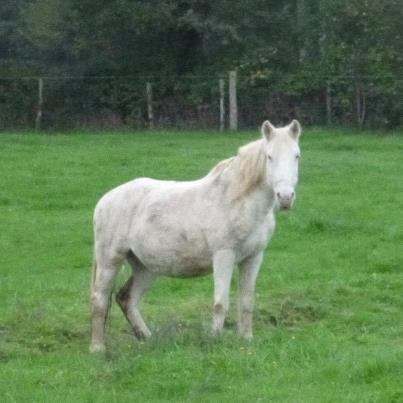 VENUS - ONC poney née en 1987 - adoptée en octobre 2012 par souris73 - Page 5 28151510