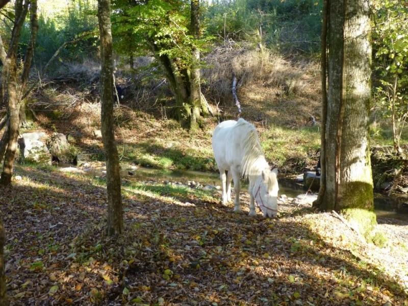 VENUS - ONC poney née en 1987 - adoptée en octobre 2012 par souris73 - Page 5 29273710
