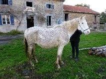 VENUS - ONC poney née en 1987 - adoptée en octobre 2012 par souris73 - Page 5 2_bmp17