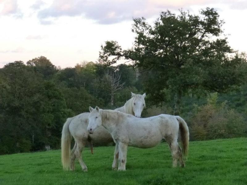 VENUS - ONC poney née en 1987 - adoptée en octobre 2012 par souris73 - Page 5 52166910