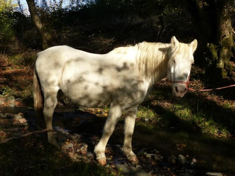 VENUS - ONC poney née en 1987 - adoptée en octobre 2012 par souris73 - Page 5 53105011