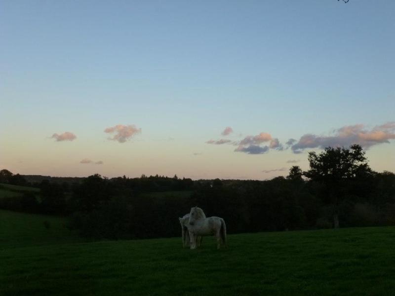 VENUS - ONC poney née en 1987 - adoptée en octobre 2012 par souris73 - Page 5 55218210