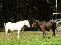 VENUS - ONC poney née en 1987 - adoptée en octobre 2012 par souris73 - Page 5 5_bmp16