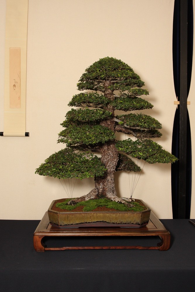 BRISTOL BONSAI SOCIETY'S SHOW,  AUGUST 2011 - a photo report Our_cb10