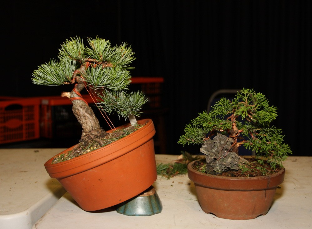 BRISTOL BONSAI SOCIETY'S SHOW,  AUGUST 2011 - a photo report Worksh10
