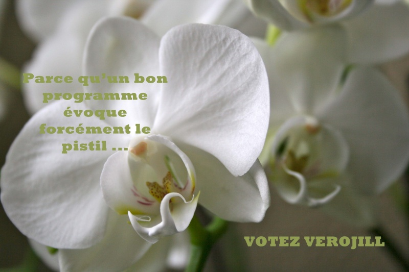 Inspiration mai 2012 : Tootsie présidente!! - Page 9 Votezc10