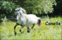 Les Crinieres de l'Yser 23076610