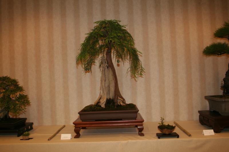bald cypress Img_7310