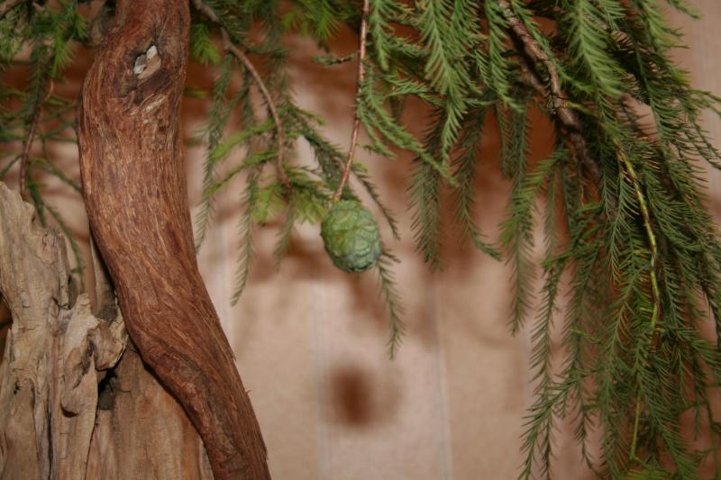 bald cypress Img_7311