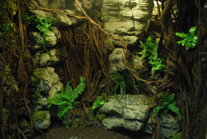 Décor terrarium queensland , et refonte d'un machin en pierre Dsc_0010