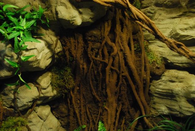 Décor terrarium queensland , et refonte d'un machin en pierre Dsc_0013