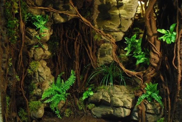 Décor terrarium queensland , et refonte d'un machin en pierre Dsc_0014