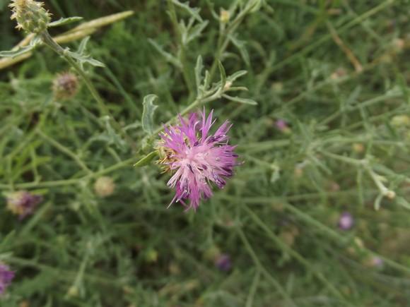 Fleurs sauvages Dscf0325