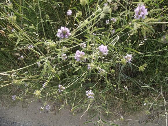 Fleurs sauvages Dscf0327
