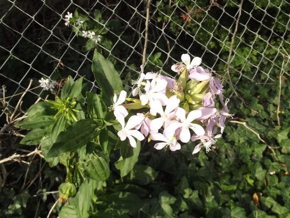 Fleurs sauvages Dscf0331
