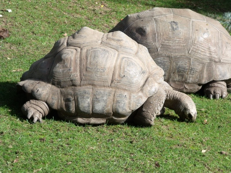 Photos tortues du zooparc de beauval Dscf4610