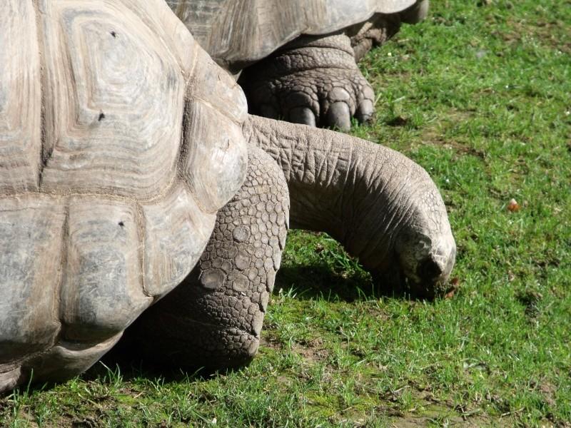 Photos tortues du zooparc de beauval Dscf4611