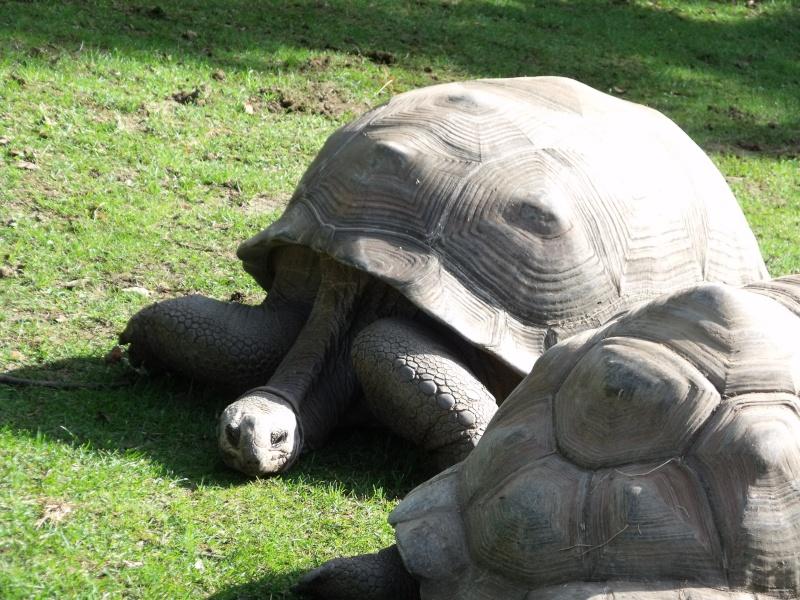 Photos tortues du zooparc de beauval Dscf4612