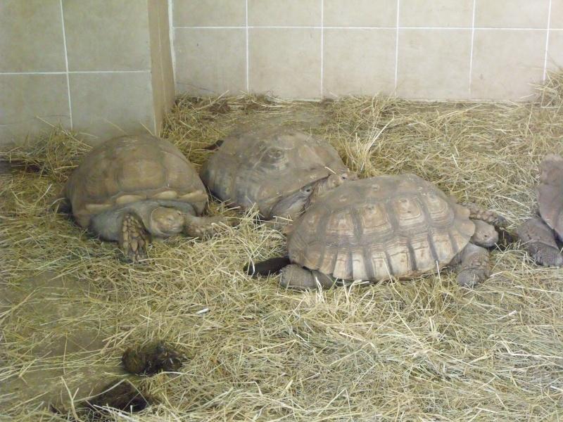 Photos tortues du zooparc de beauval Dscf4613