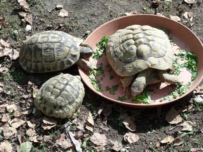 Photos tortues du zooparc de beauval Dscf4910