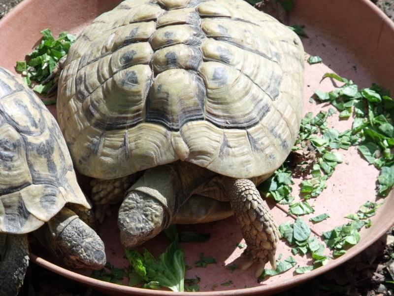 Photos tortues du zooparc de beauval Dscf4911