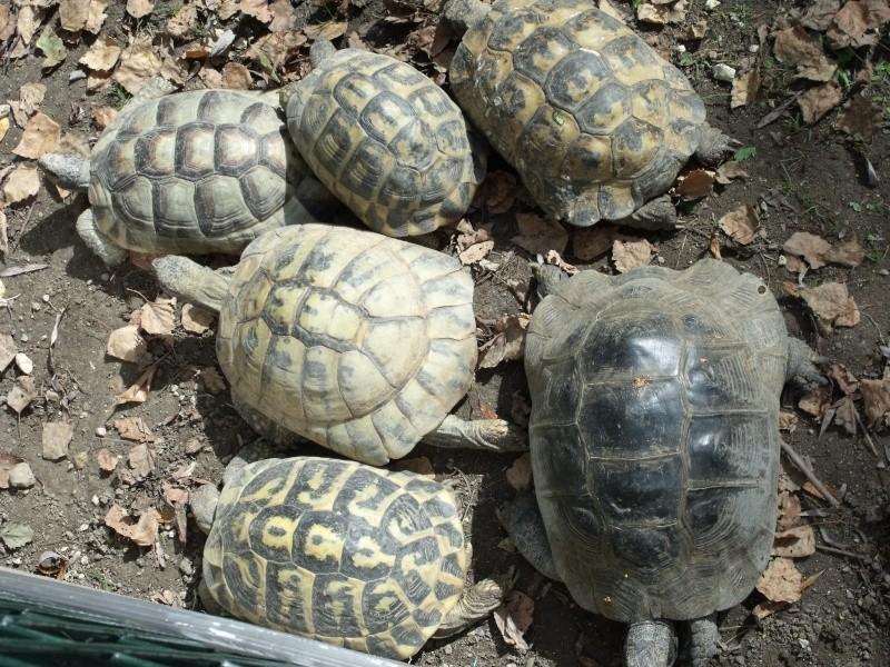 Photos tortues du zooparc de beauval Dscf4912
