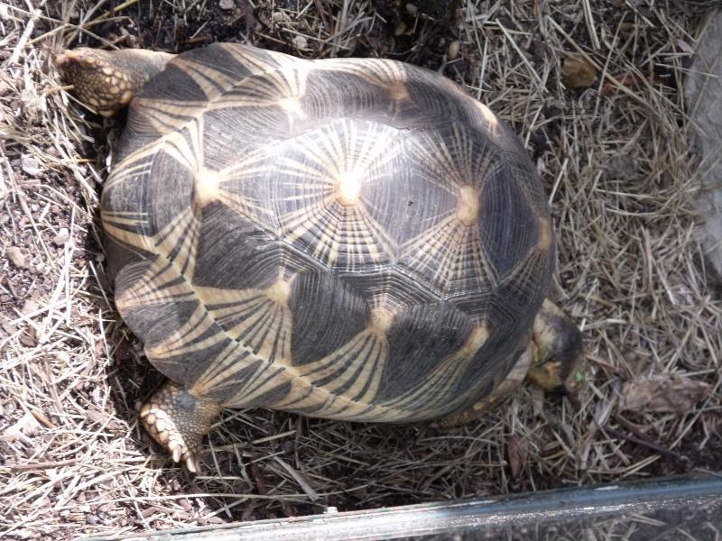 Photos tortues du zooparc de beauval Dscf4913