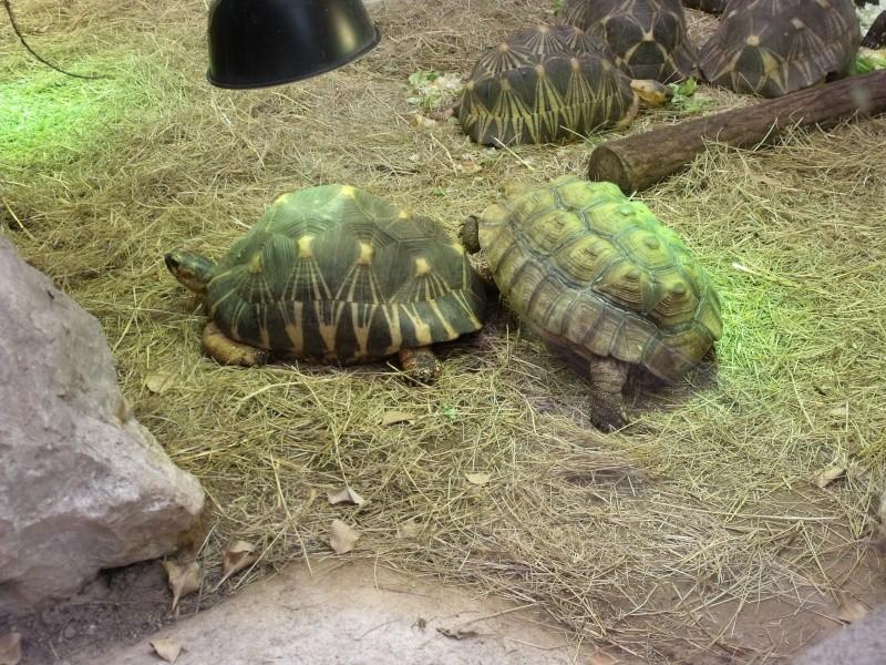 Photos tortues du zooparc de beauval Dscf4914