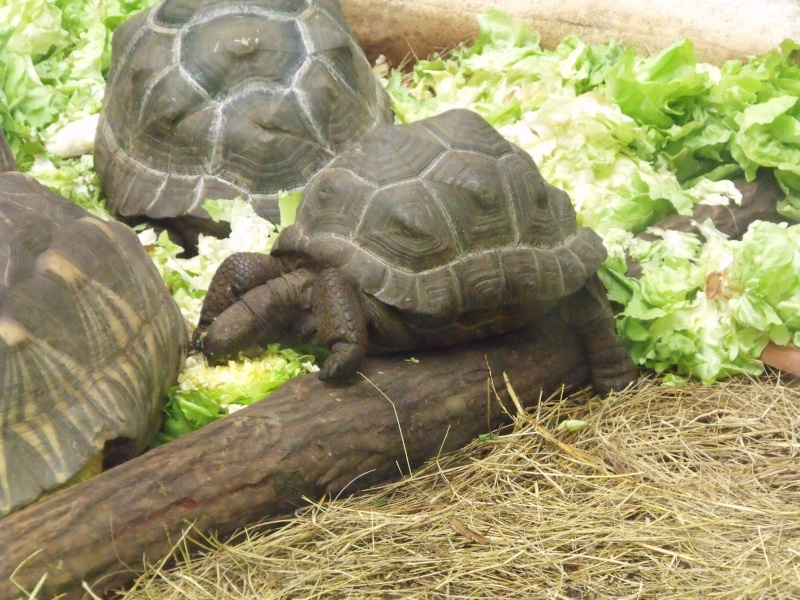Photos tortues du zooparc de beauval Dscf4916